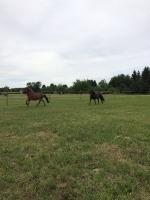 Pony Picknick