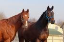 rund um die Pferde