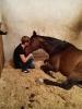 rund um die Pferde_14