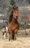rund um die Pferde_17