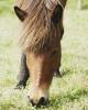 rund um die Pferde_19