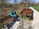 rund um die Pferde_21