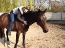 rund um die Pferde_23