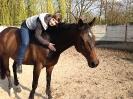 rund um die Pferde_24