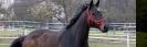 rund um die Pferde_28