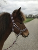 rund um die Pferde_2