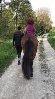Rund um die Pferde_35