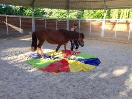 Rund um die Pferde_36